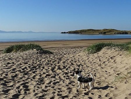 Dog Friendly Beaches in North Wales