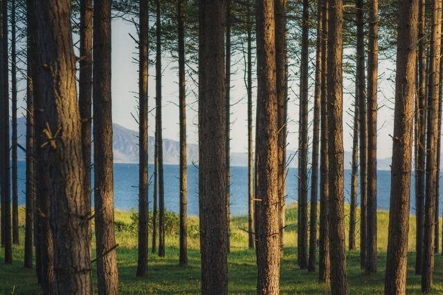 Views of the Menai Strait, through tress of Newborough Forest
